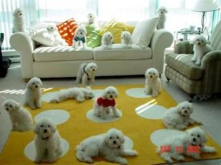 A whole lot of fluffy puppies!