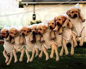 These puppies are hanging out to dry!