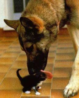 Be careful, don't swallow that kitten!