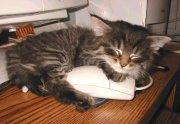 This kitten loves her mouse!
