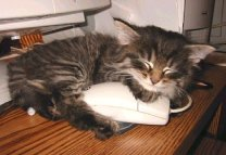 This kitten loves her mouse!