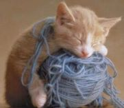 This kitten's just a ball of yarn!