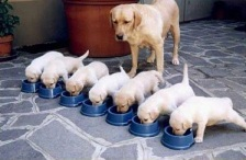 That's a whole lot of puppies!