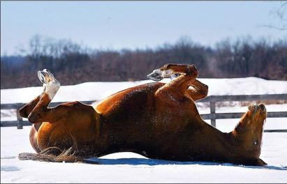 This horse loves the snow!