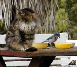 This cat seems to have forgotten it eats birds...