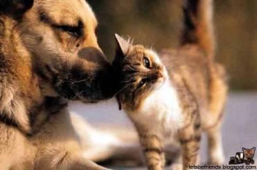 This kitten really loves her pal!