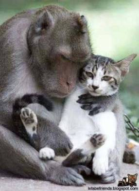 This monkey loves her cat!