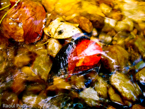 Leaves trapped among pebbles