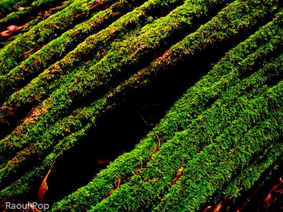 Thick moss growing on tree bark