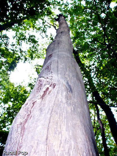 A nonconformist tree