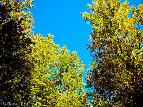 A glimpse of the autumn sky