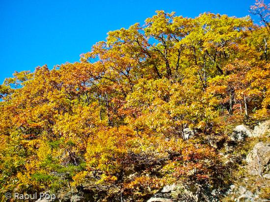 Trees on a mountain peak