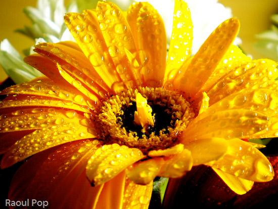 Waterdrops on petals