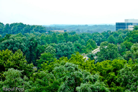 Virginia forest from above