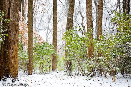 Snowing in the forest