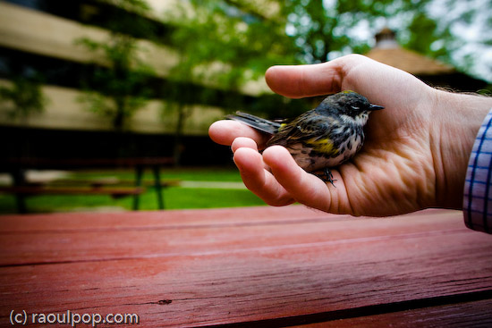 Goodbye, little bird, goodbye