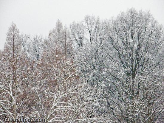 Trees during snowfall