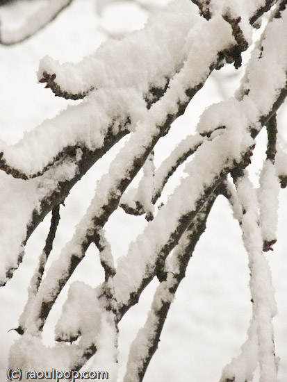 Twigs weighed down by snow
