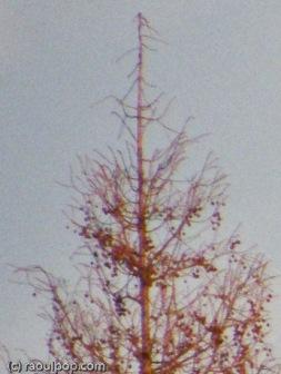 1:1 crop at full focal length (486mm)