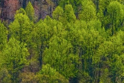 Shenandoah Valley Panoramic V-II (1:1 detail)