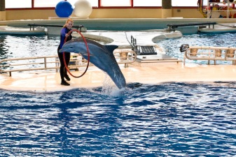 Baltimore Aquarium's Dolphin Show