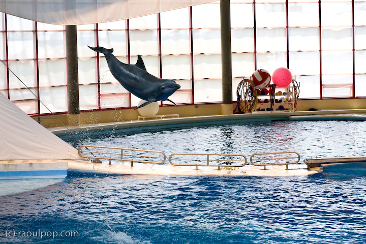 [Photos Dauphins] Sauts les plus impressionnants - Page 2 Baltimore-aquarium-dolphin-show-611