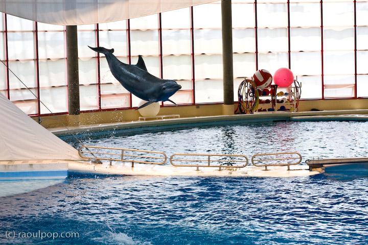 [Photos Dauphins] Sauts les plus impressionnants Baltimore-aquarium-dolphin-show-611