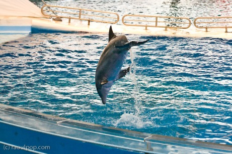 Baltimore Aquarium's Dolphin Show
