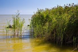 Lacul Sinoe V