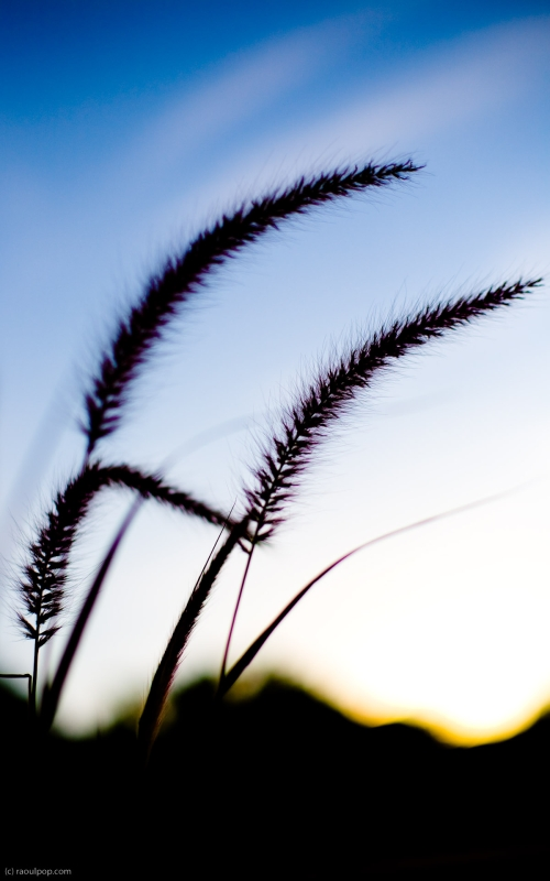 Stems of long grass flutter in the cool evening wind.