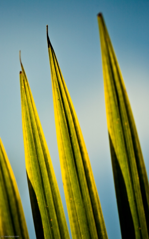 The claw-like leaves of a palm leaf with the sun's rays shining through.