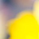 yellow-blur