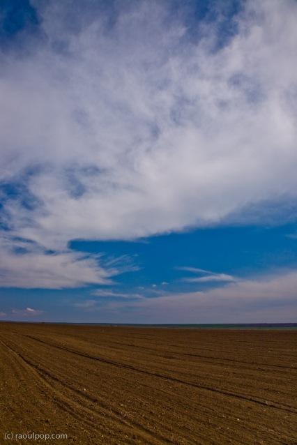 Farmland in spring