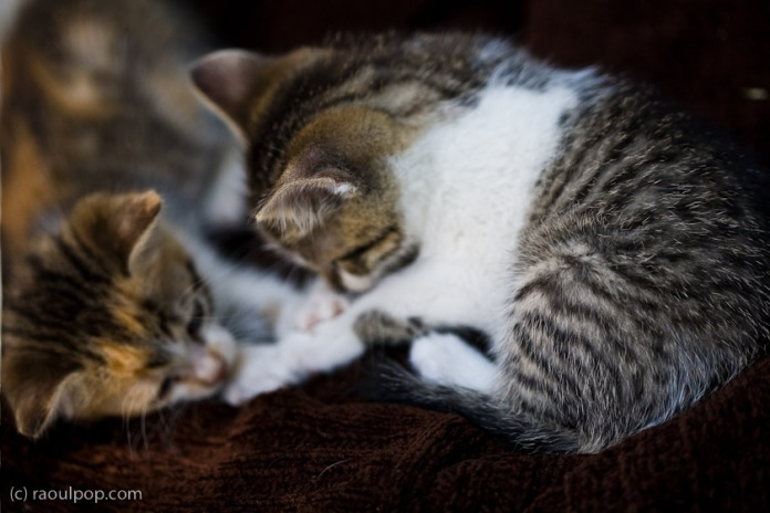 Games kittens play