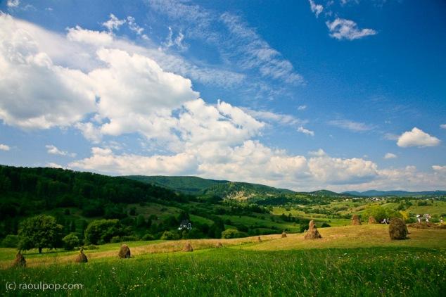 Gathering hay in Bucovina
