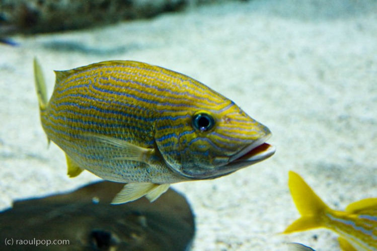 baltimore-aquarium-107