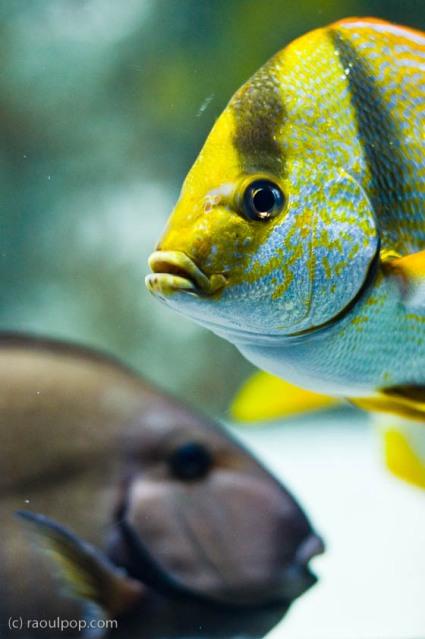 baltimore-aquarium-110