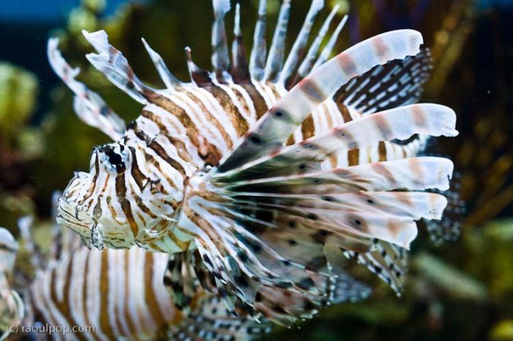 baltimore-aquarium-137