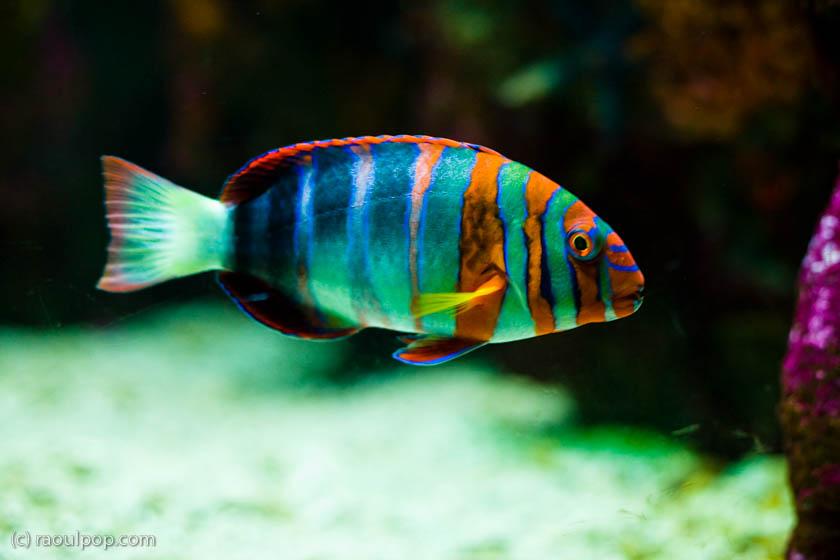 The Baltimore Aquarium Raoul Pop