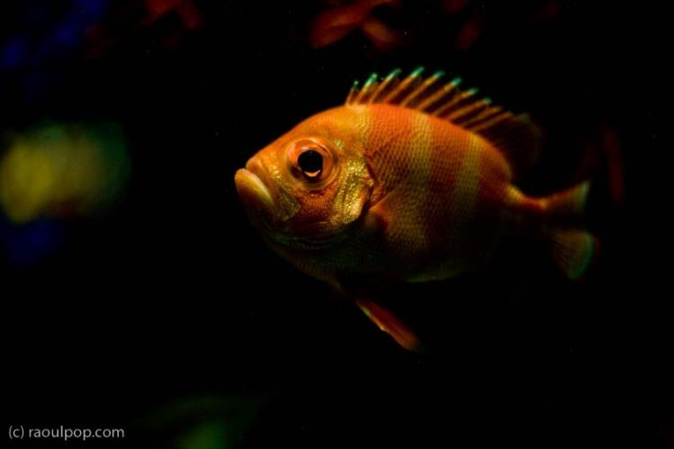 baltimore-aquarium-45