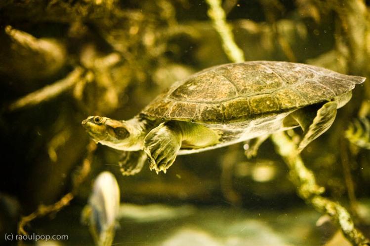 baltimore-aquarium-67
