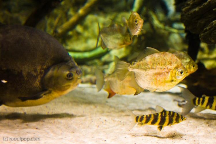 baltimore-aquarium-80
