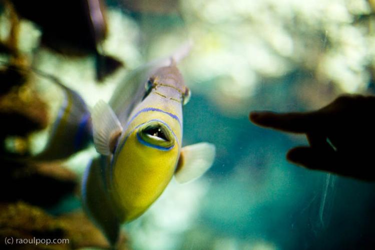 baltimore-aquarium-96