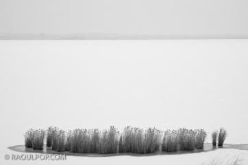Reeds on frozen lake
