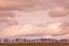 Poplars line the distant road