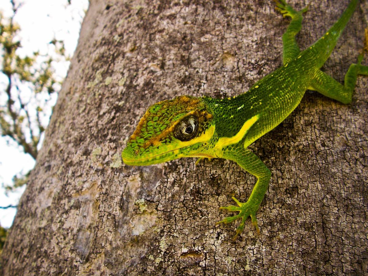 The inquisitive lizard