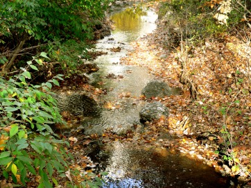 A brook in autumn
