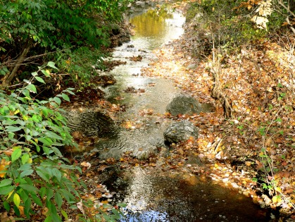 A brook in autumn