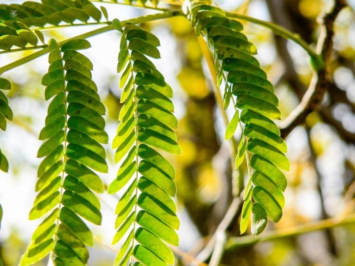 A branch with tiny green leaves, CMC, Washington, DC, USA.