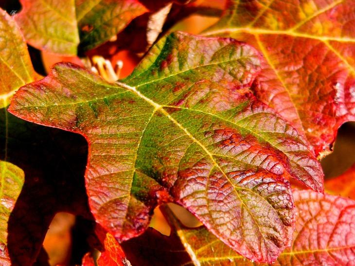 Fall foliage, CMC, Washington, DC, USA.